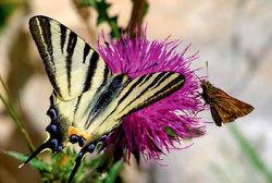 Station 2 - Schmetterlinge