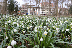 Grußkarte - Frühling im Stadtgarten