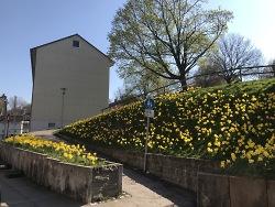 Frühling im Stadtteil Rötenberg
