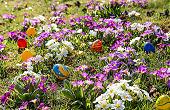 Auf diesem Bild ist ein Blumenfeld zu sehen, in dem Ostereier verteilt sind.