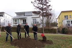 Neue Eiche von VR-Bank Ostalb auf Schillerhöhe