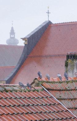 Kein seltener Anblick: Tauben auf den Dächern von Aalen.